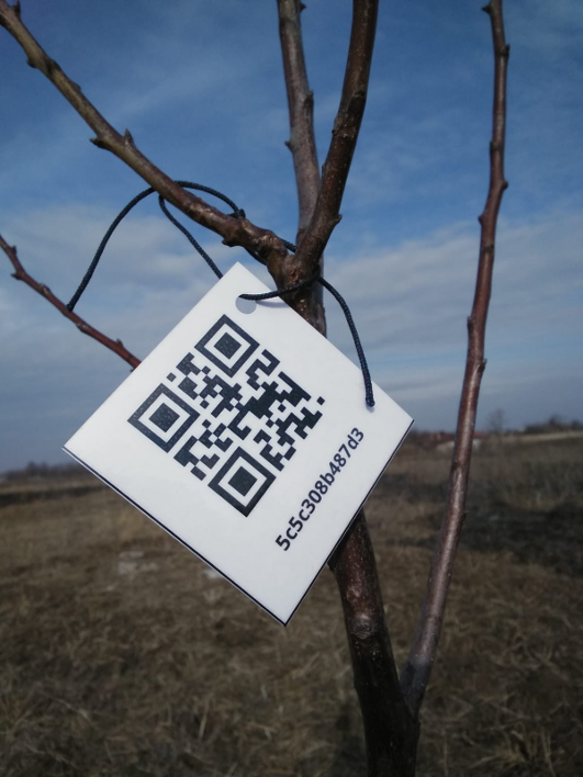 QR-Code on Tree